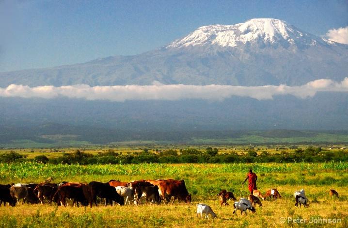 Herding Beneath Kilimanjaro - Tanzania