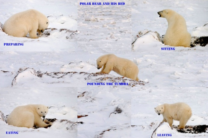 STORY OF THE POLAR BEAR BED
