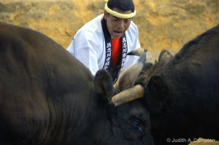 Okinawa bullfight