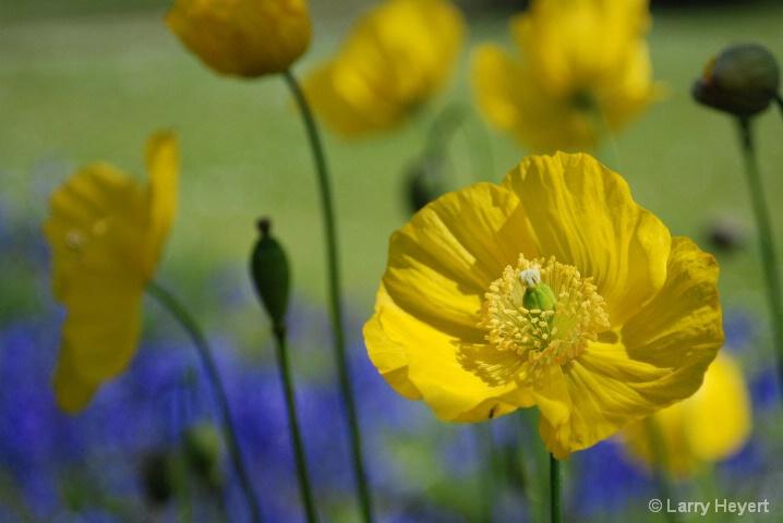 Scotland- from the garden at Cawdor Castle