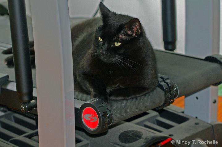 Cat on the Treadmill