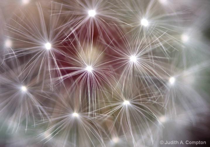 dandy fireworks
