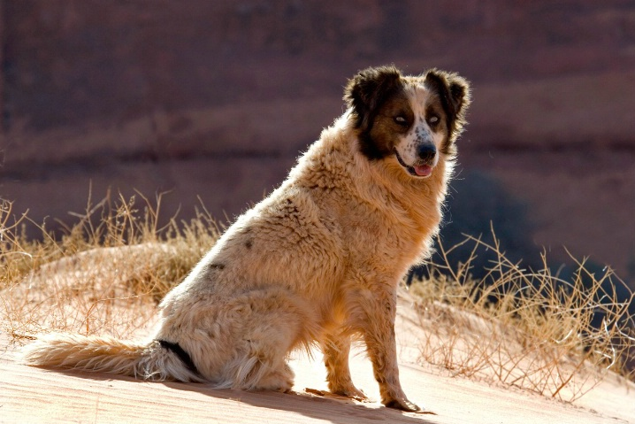 Homeless Dog in the Arizona Desert