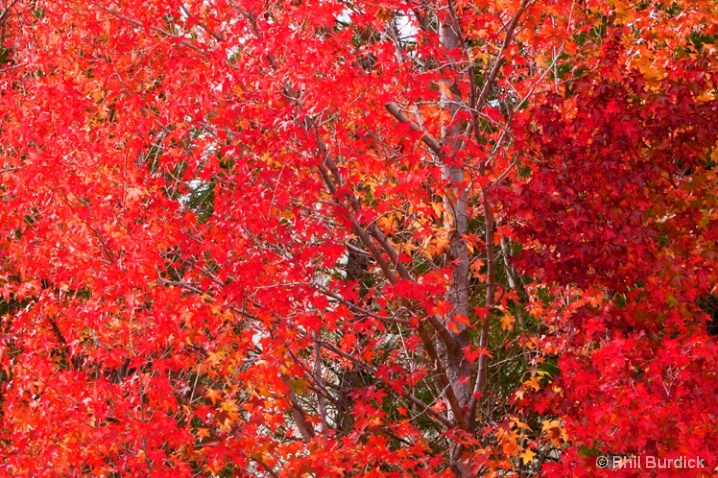 fall_aflame