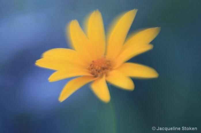 Prairie Flower f 0