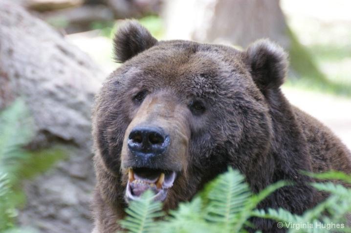 Brown Bear Trek