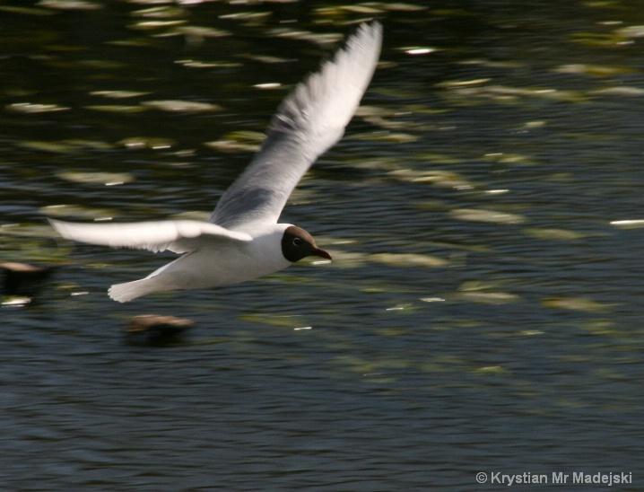 Konstancin's bird - Poland