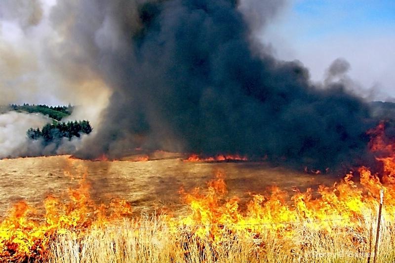 Field Burn, Oregon
