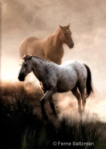 Equine Spirts