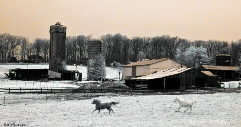 Montgomery County Horses