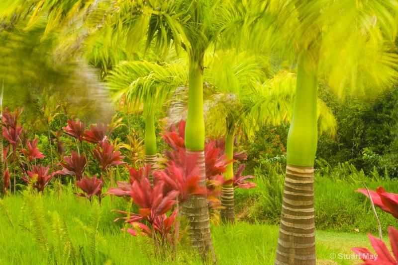 Maui winds 3