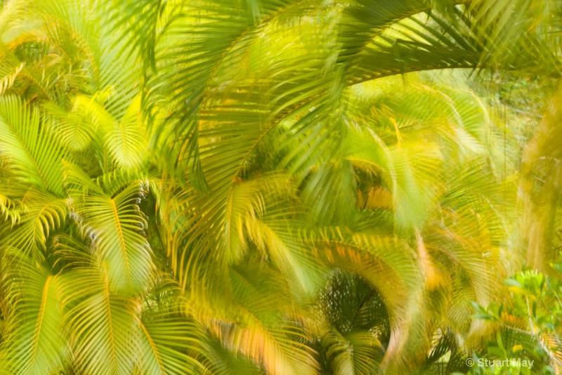 Maui winds 2