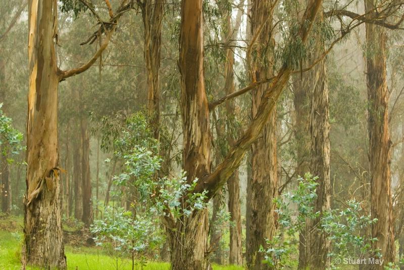 tree mist 5