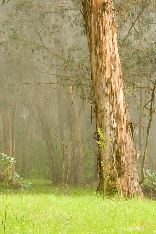 tree mist 4