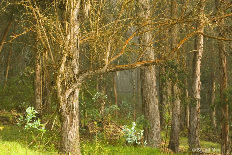 tree mist 3