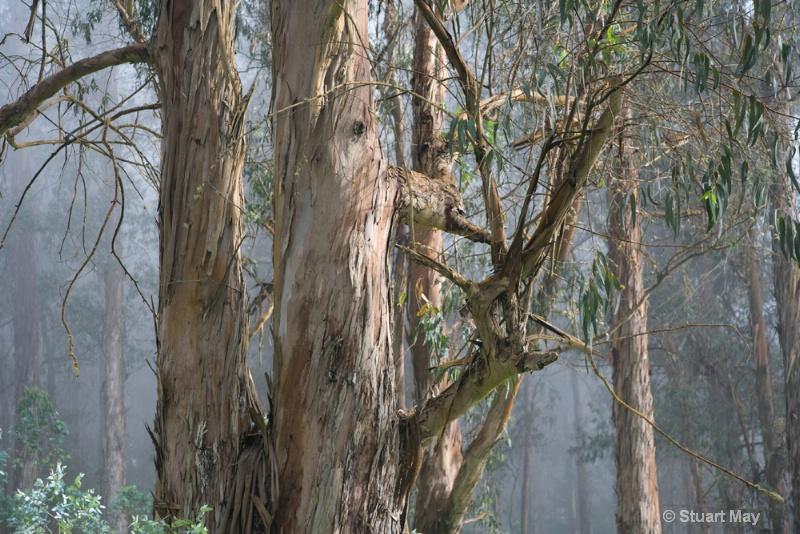 tree mist 2