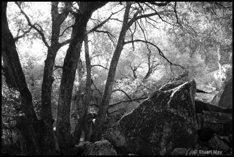 tree rocks 1