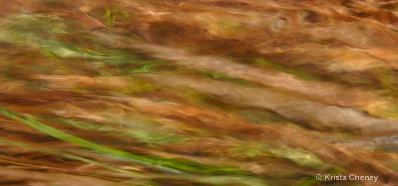 Grass in runoff II