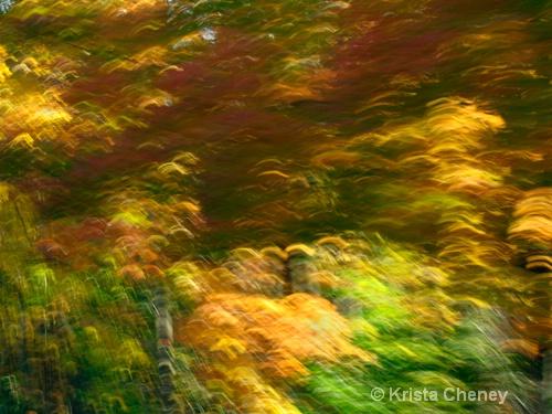 Fall foliage I