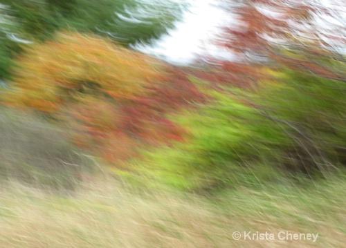 Fall foliage VI