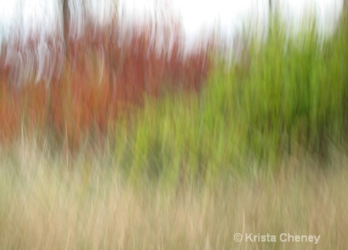 Fall foliage V