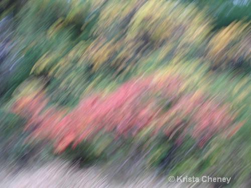 Fall Foliage VII