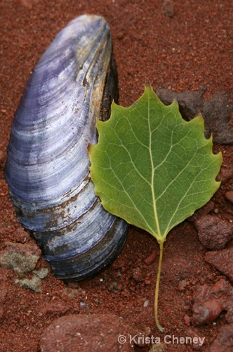 Shell and leaf, Belmont Provincial Park, PEI