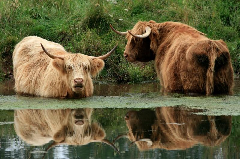 Cooling Highlanders