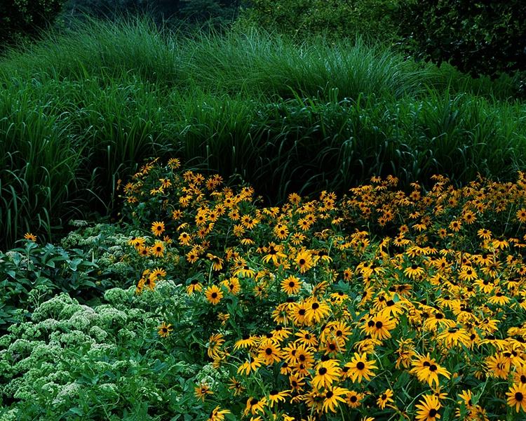 002mixedflowers