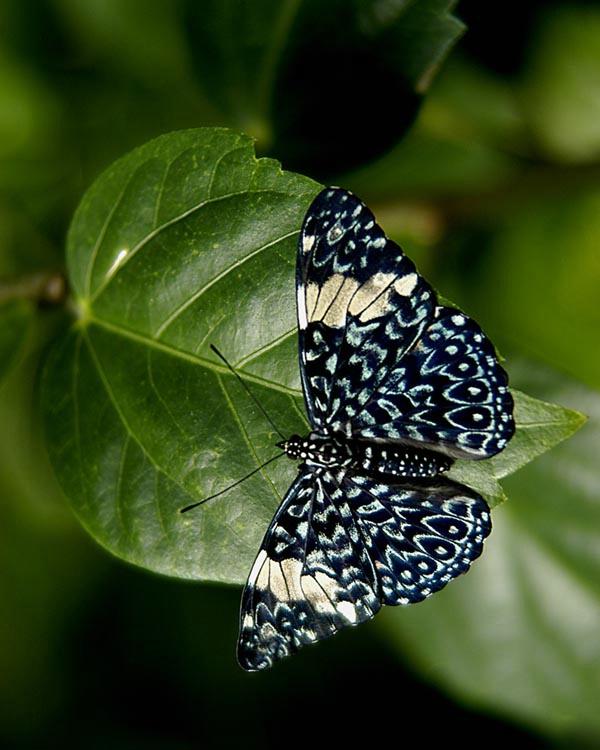 005butterfly