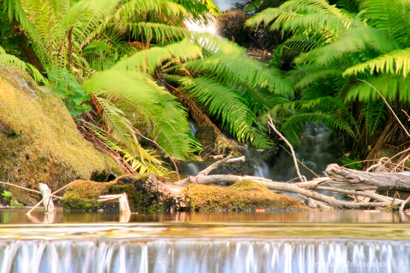 Waterfall with the ferns
