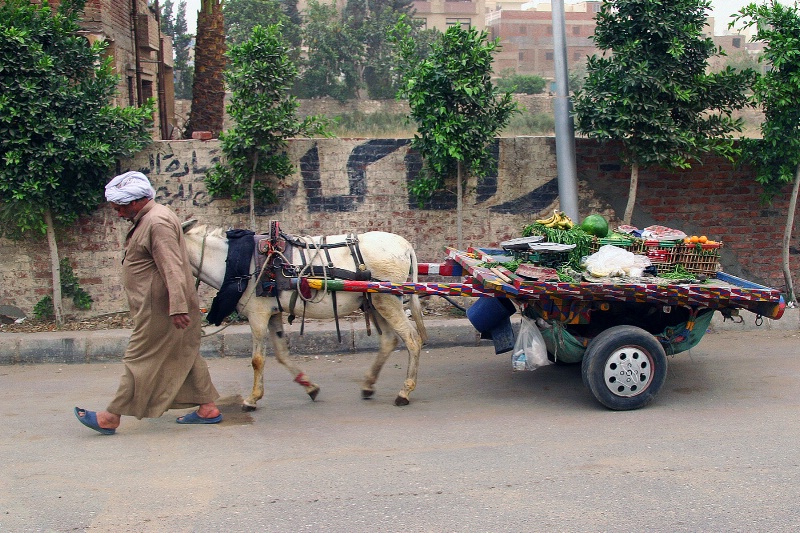 Cairo Pedaler