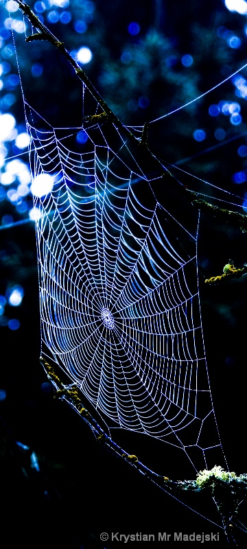 Spider's web elegance