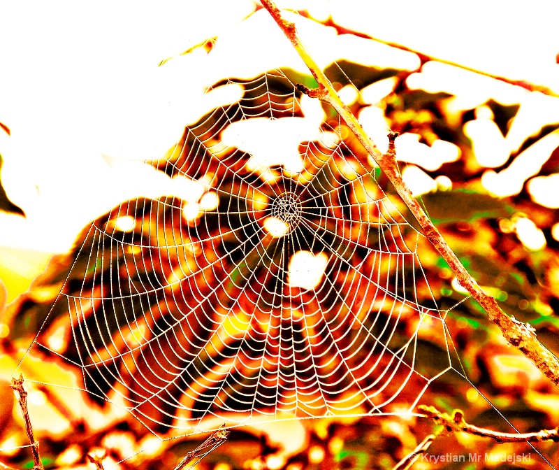 Spider's web fall (1)