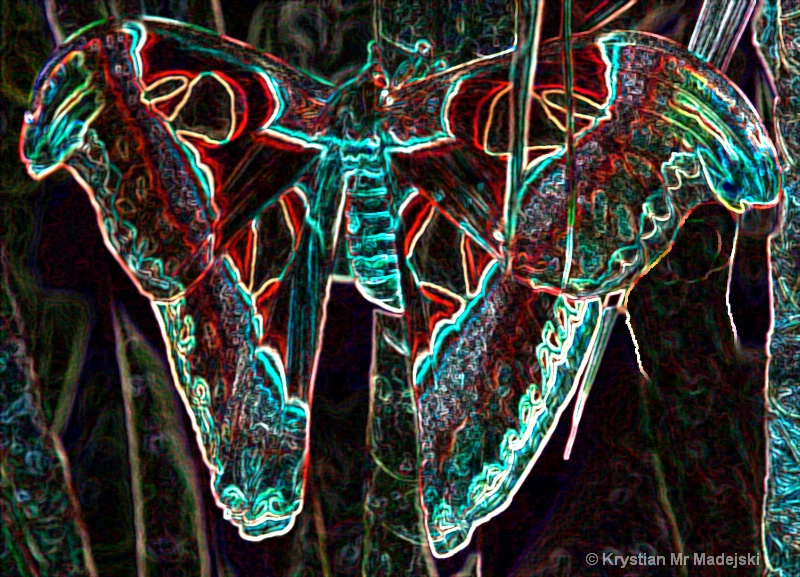 Cobra butterfly crystalize