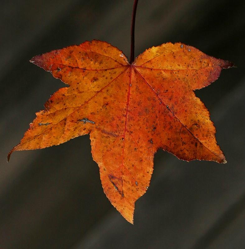 Fall - ing