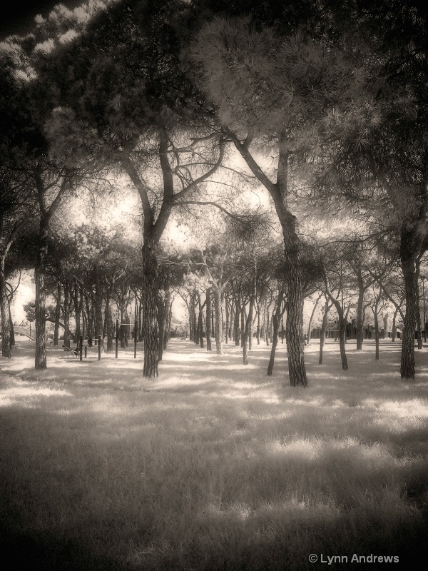 Gothic Forest  (Infrared) In Venice