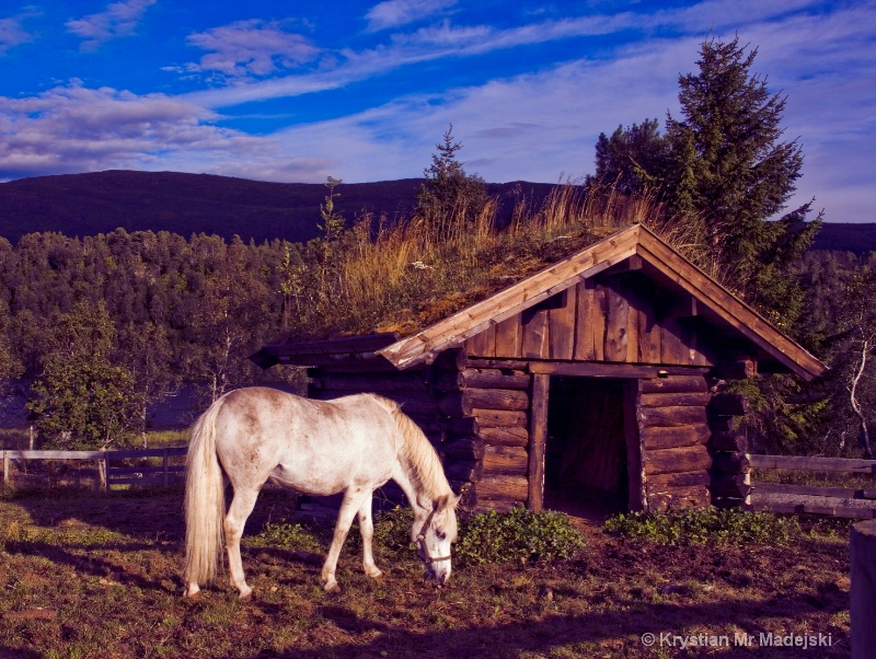 Horse and a cottage