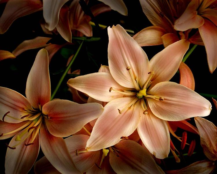 058mixedflowers
