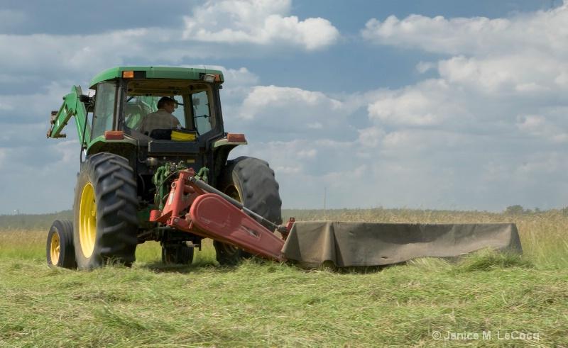 Rural Life - Harvest #1