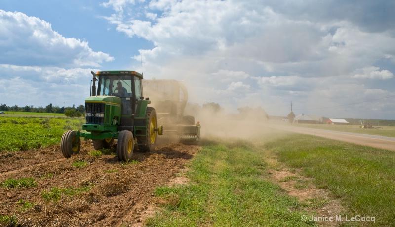 Rural Life - Peanut Harvest
