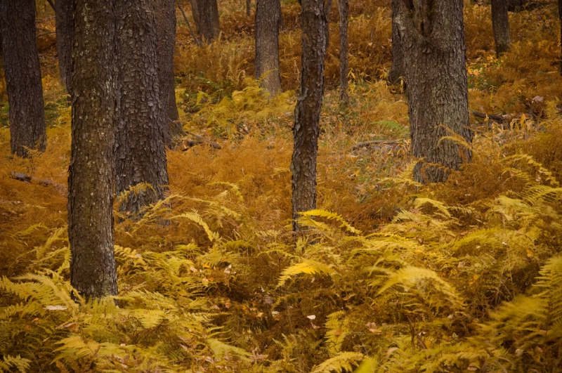 fall-in-the-fern-forest