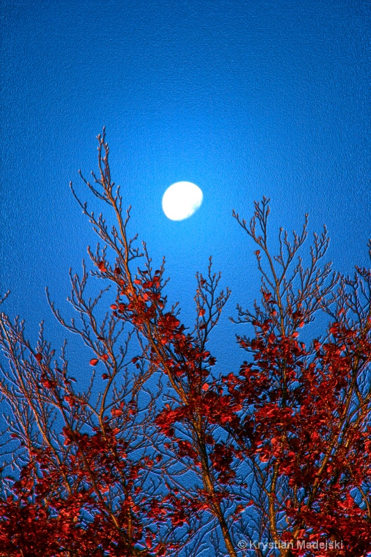 Tree and the moon in autumn BLUE
