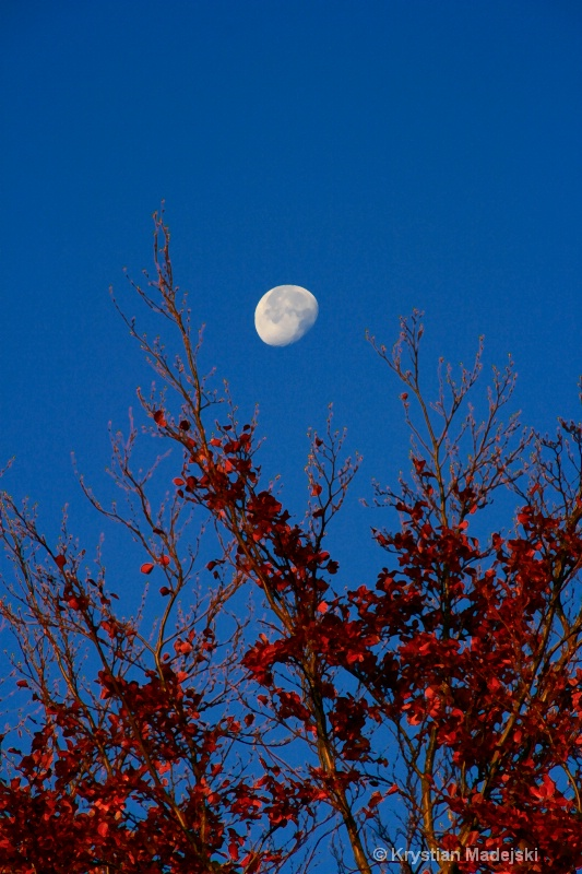 Tree and the moon in autumn DRY BRUSH