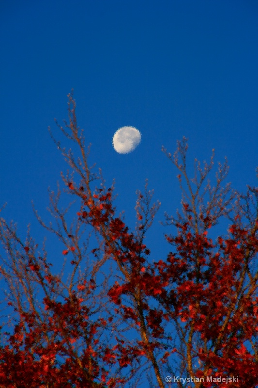 Tree and the moon in autumn GLASS