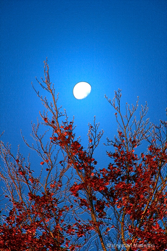 Tree and the moon in autumn GREEN