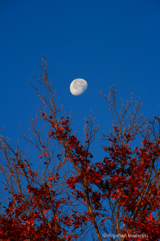 Tree and the moon in autumn ORYGIN