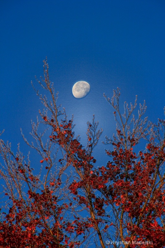 Tree and the moon in autumn PLASTIC
