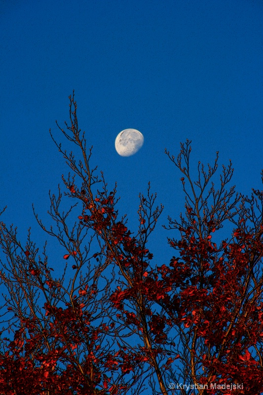 Tree and the moon in autumn POSTER