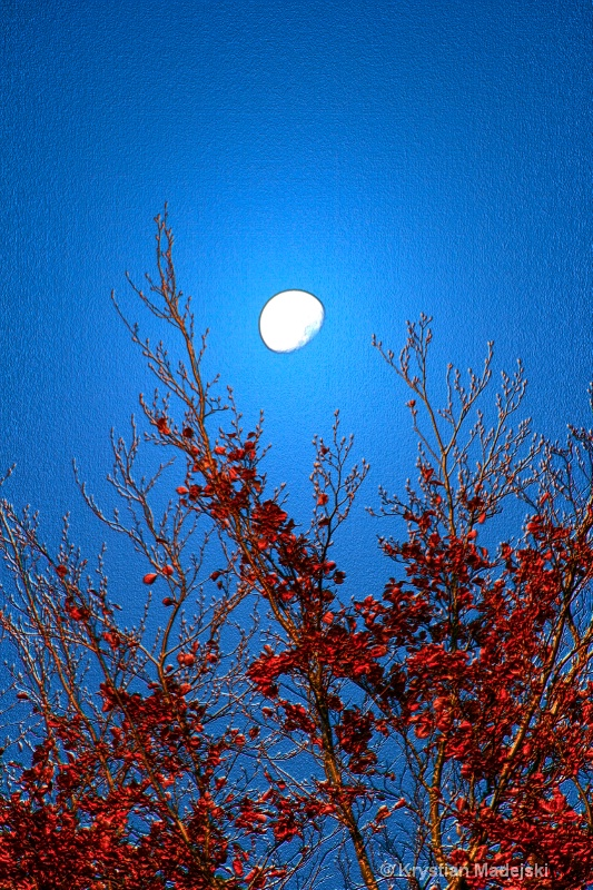 Tree and the moon in autumn RED